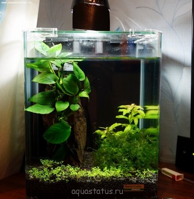 Мой аквариум-лягушатник 30 литров dankora  - DSC00668.JPG