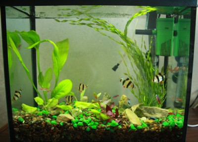 теперь аквариум стал вот такой  - IMG_4208_1.jpg