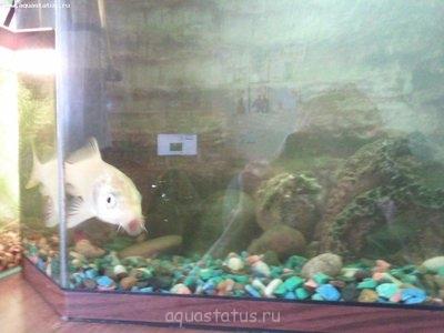 Помогите опознать рыбку опознание рыб  - IMG_20130707_122602.jpg