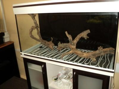 Мои аквариумы Алексей7  - DSC00113.JPG