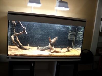 Мои аквариумы Алексей7  - DSC00180.JPG