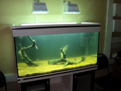 Мои аквариумы Алексей7  - DSC00190.JPG