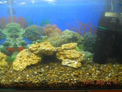 Мой аквариум на 30 литров болик  - 3.jpg