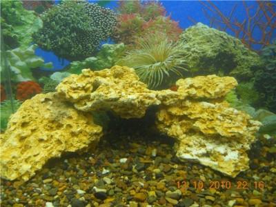 Мой аквариум на 30 литров болик  - 1.jpg