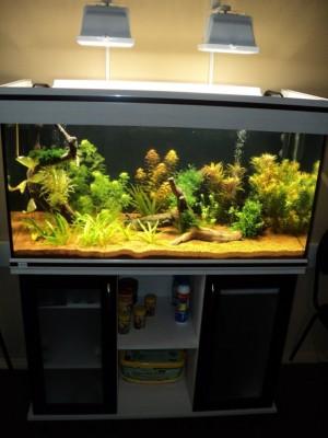 Мои аквариумы Алексей7  - DSC00221.JPG