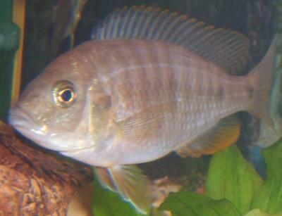 Помогите опознать рыбку опознание рыб  - S5000012.JPG