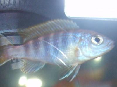 Помогите опознать рыбку опознание рыб  - S5000023.JPG