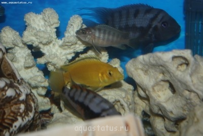 малек тех самый рыб самый маленький серого цвета - IMG_0790.JPG