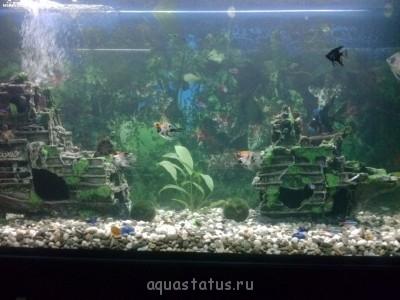 Мой аквариум 250 литров. Каспер  - CAM00030[1].jpg