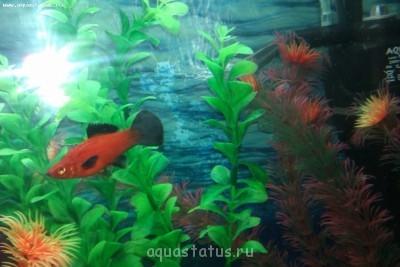 Помогите опознать рыбку опознание рыб  - IMAG0114.jpg
