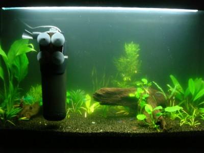 Цветение воды, зеленая вода, позеленела аквариум - 006.JPG