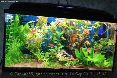 Фото аквариумов объемом от 101 до 250 литров - IMG_4441.JPG