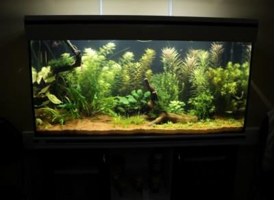 Мои аквариумы Алексей7  - DSC00292.JPG