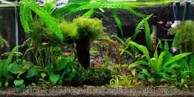 Фото аквариумов объемом от 101 до 250 литров - 0_9eede_cd039031_orig.jpg
