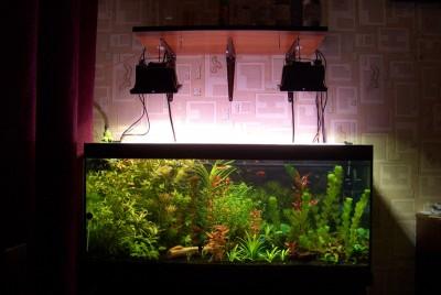 Фото аквариумов объемом от 101 до 250 литров - 180 литров.jpg