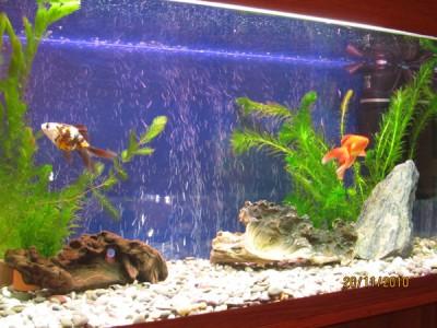 Фото аквариумов объемом от 101 до 250 литров - 150 литров.jpg