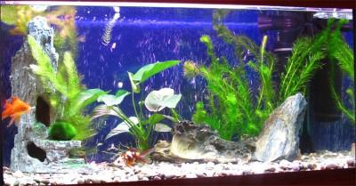 Фото аквариумов объемом от 101 до 250 литров - 150 литров1.jpg