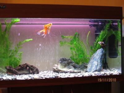 Фото аквариумов объемом от 101 до 250 литров - 150 литров2.jpg