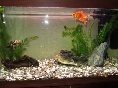 Фото аквариумов объемом от 101 до 250 литров - 150 литров3.jpg