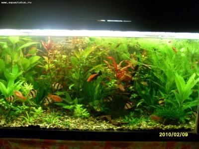 Фото аквариумов объемом от 101 до 250 литров - аквариум4.jpg
