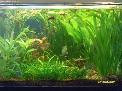Фото аквариумов объемом от 101 до 250 литров - аквариум5.jpg