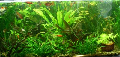 Фото аквариумов объемом от 101 до 250 литров - аквариум6.jpg