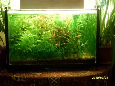 Фото аквариумов объемом от 101 до 250 литров - аквариум8.jpg