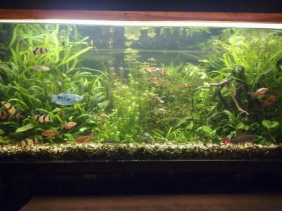 Фото аквариумов объемом от 101 до 250 литров - 190л 30.11.2010.jpg