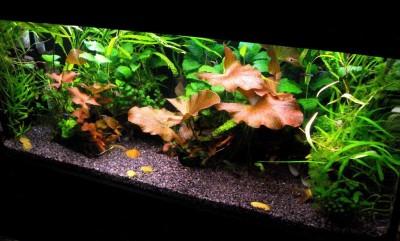 Фото аквариумов объемом от 101 до 250 литров - аквариум1.jpg