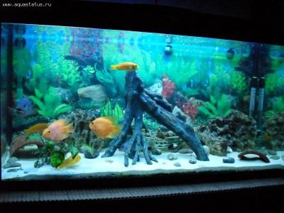 Фото аквариумов объемом от 101 до 250 литров - 200 литров.jpg
