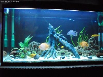 Фото аквариумов объемом от 101 до 250 литров - 200 литров1.jpg