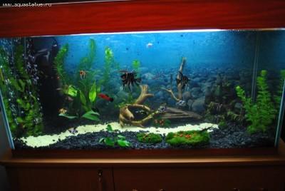 Фото аквариумов объемом от 101 до 250 литров - аквариум.jpg