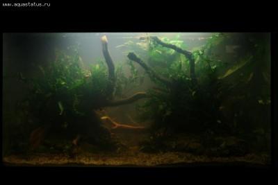 Фото аквариумов объемом от 101 до 250 литров - 170 литров.jpg