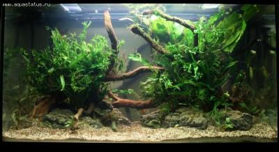 Фото аквариумов объемом от 101 до 250 литров - 170 литров2.jpg