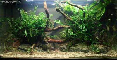 Фото аквариумов объемом от 101 до 250 литров - 170 л 0784.jpg