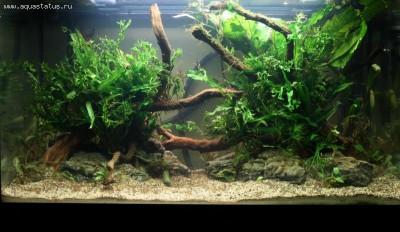 Фото аквариумов объемом от 101 до 250 литров - 170 л 0825.jpg