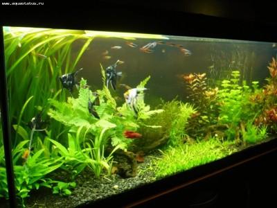 Фото аквариумов объемом от 101 до 250 литров - аквариум2.jpg