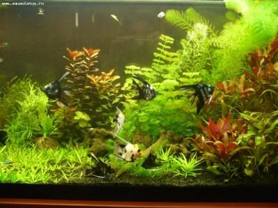 Фото аквариумов объемом от 101 до 250 литров - аквариум3.jpg