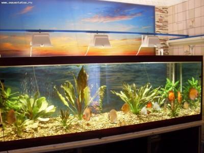 Фото аквариумов объемом свыше 401 литра - 400 л.jpg
