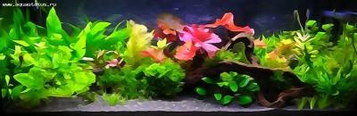 Фото аквариумов объемом от 101 до 250 литров - мой аквариум.jpg