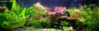 Фото аквариумов объемом от 101 до 250 литров - мой аквариум5.jpg