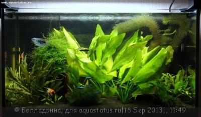 Фото аквариумов объемом от 31 до 100 литров - 006.JPG