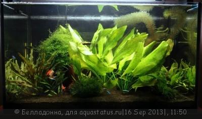 Фото аквариумов объемом от 31 до 100 литров - 007.JPG