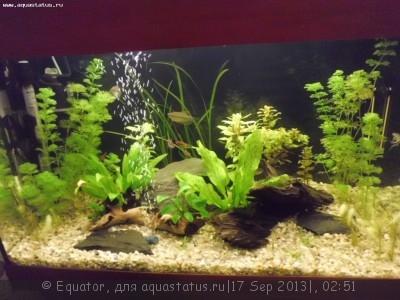 Фото аквариумов объемом от 31 до 100 литров - 13.09.2013.JPG