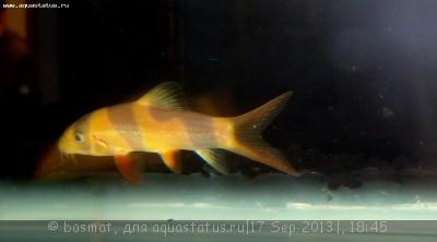 Фото болезней аквариумных рыб - DSC03464о.jpg
