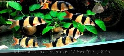 Фото болезней аквариумных рыб - DSC04156б.jpg