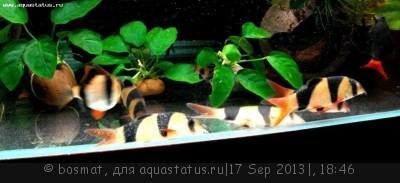 Фото болезней аквариумных рыб - DSC04163ь.jpg