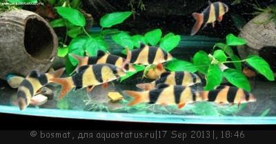 Фото болезней аквариумных рыб - DSC04232ь.jpg