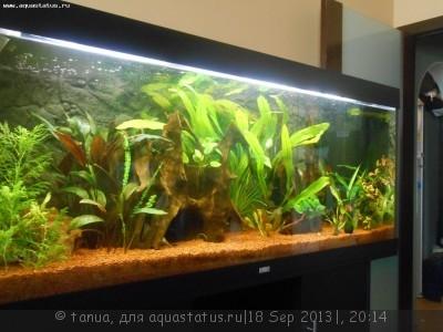 Фото аквариумов объемом свыше 401 литра - 262.JPG
