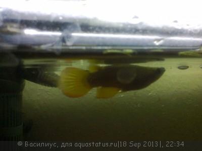 Помогите опознать рыбку опознание рыб  - photo0065.jpg